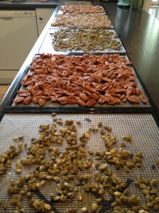 Ready for the dehydrator.