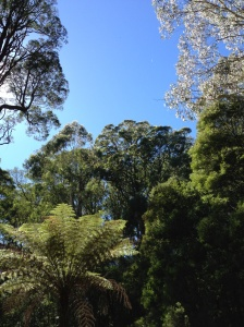 There was plenty of time to stop and smell the gum trees, and to breath in the beautiful fresh air..once my lungs recovered that is.