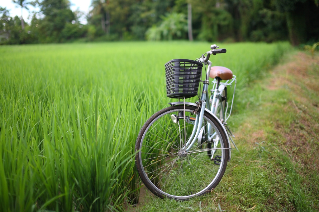 bicycle in rice paddy, asia -Thailand