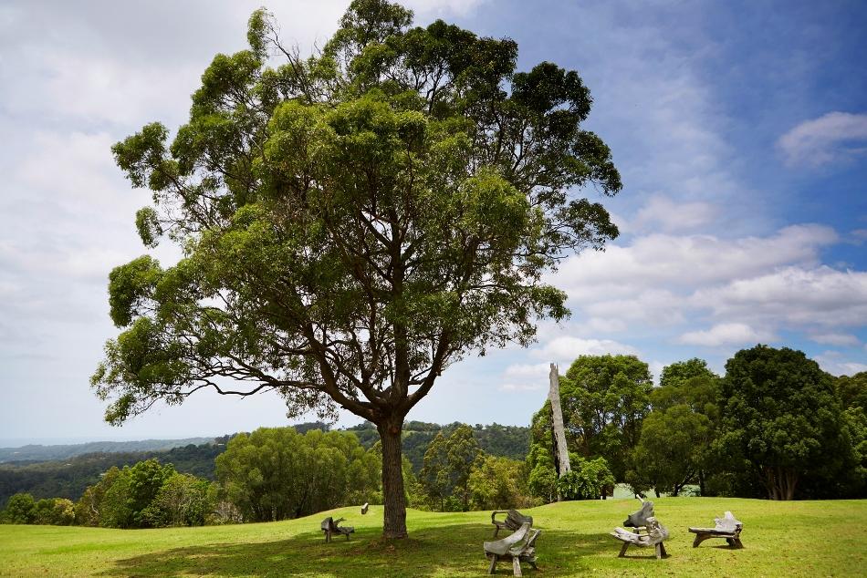 Gwinganna view tree e